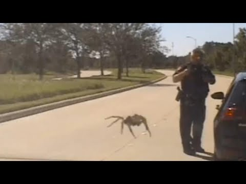 Katie Sommers Radio Network - Man Crashes Car Into Bus Shelter After Seeing SPIDER In His Car