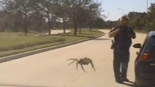 Massive Spider Seemingly Creeps Up on Cop During Traffic Stop thumbnail