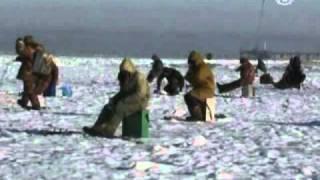 На Дальнем Востоке открыт сезон зимней рыбалки(http://russian.ntdtv.com) На Дальнем Востоке любители подледного лова открывают рыболовный сезон. Лед еще не покрыл..., 2010-12-14T15:01:50.000Z)