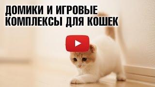 Домики-когтеточки и игровые комплексы для кошек 😼