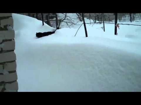 Котэ и много снега
