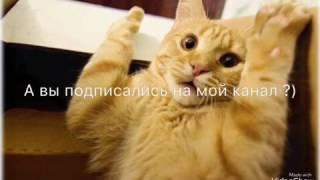 Рыжие коты ))