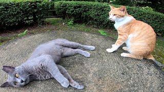 テーブルの下で寝ていた野良猫をナデナデしていたら別の猫もやってきた