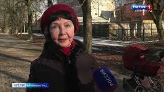 В Калининграде впервые начнут лечить каштаны