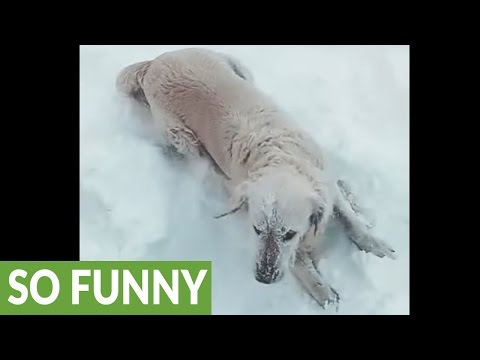 Happy dog plays in snow during -23°C weather