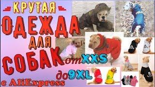 видео Аксессуары Для Собак – Купить Аксессуары Для Собак недорого из Китая на AliExpress