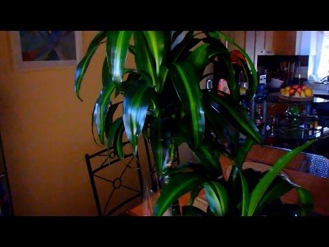 Беговая дорожка для дома и офиса Persona от PROXIMAиз YouTube · Длительность: 2 мин24 с