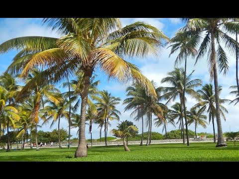 Top Tourist Attractions in Miami Beach: Travel Guide Florida