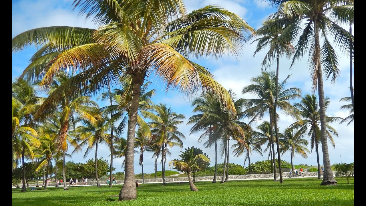 Top Tourist Attractions In Miami Beach Travel Guide Florida YouTube - Florida map attractions