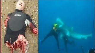 [Best Animal Fights]  [Wild Animal Attack]  Extreme Animal Attacks on Humans in The Water