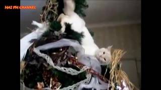 Funny Cats Videos   Cats vs Christmas Trees Compilation