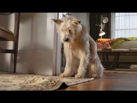 Travelers Insurance Dog Commercial Very Funny Youtube