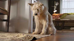 Travelers Insurance dog commercial (very funny)