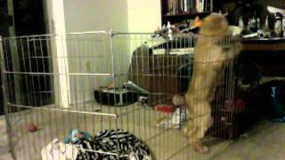 Spy Cam Caught My Puppy Secret Way Of Escaping