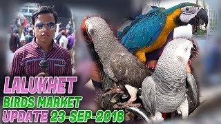 Lalukhet Sunday Birds Market 23-9-2018 Latest Updates (Jamshed Asmi Informative Channel) Urdu/Hindi
