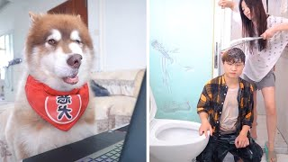 The dogs are cute and funny #41  Dog funny video Compilation