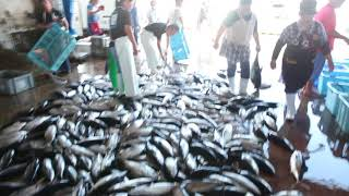 2018カツオ漁スタート