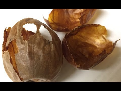 Avocado Seed Husks Could Be A Gold Mine Of Medicinal And Industrial  Compounds