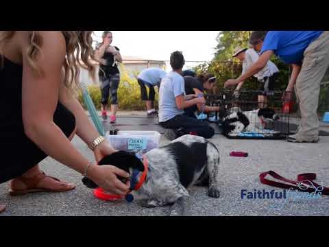 Faithful Friends New Mexico Transport