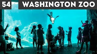 Washington ZOO / день 54