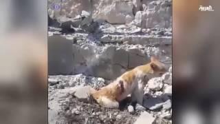 #أنا_أرى وقفة احتجاجية ضد القصف الروسي على حلب