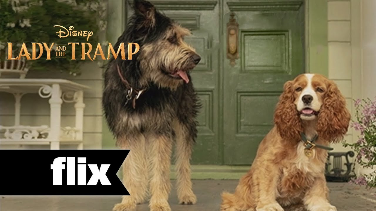 Disney S Live Action Lady And The Tramp Is Here The Dog People By Rover Com