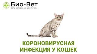 Короновирусная инфекция у кошек. Ветеринарная клиника Био-Вет.