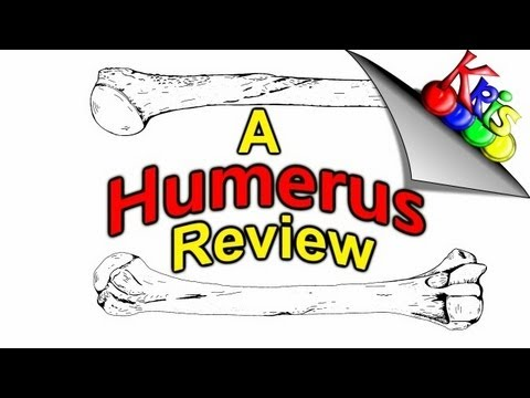 Humerus Bone Anatomy → Bony Landmarks Of The Humerus || By: Kinesiology Kris