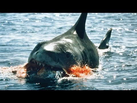 10 Worst Shark Attacks
