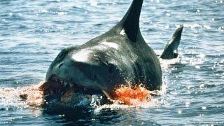 10 Worst Shark Attacks