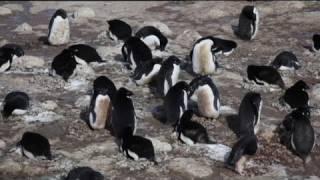 euronews science – بكتيريا مقاومة تهدد القطب الجنوبي