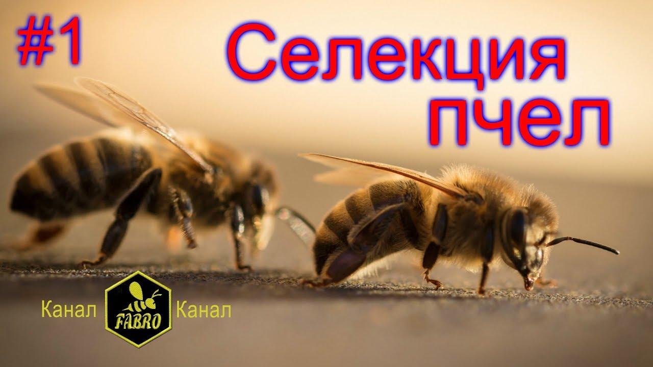 Селекция украинских пчел и путь их улучшения - Доскоч Иван Михайлович / часть1