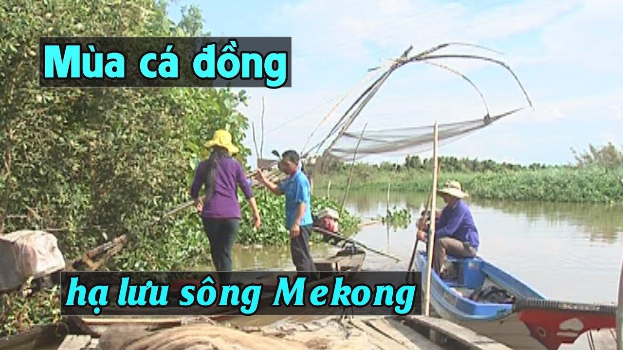 Image result for Hạ Lưu sông Mekong