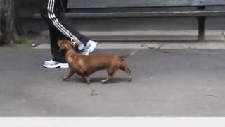 """Dog Exercise With Super Fit Fido Club """"get Your Trot On!"""""""