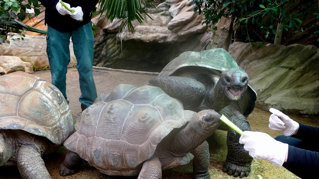 Meet And Greet Our Giant Tortoises Youtube