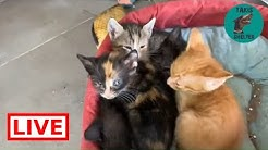 My lovely cats 🐈 - Takis shelter