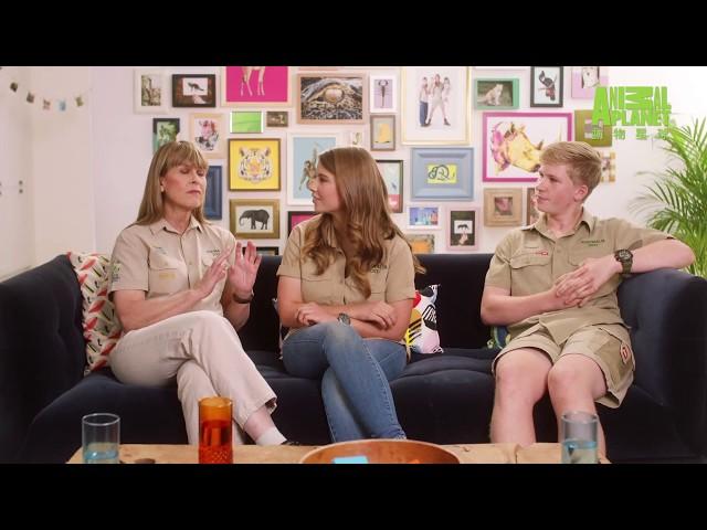 《厄文一家來閒聊》讓你更了解「鱷魚拍檔這一家」