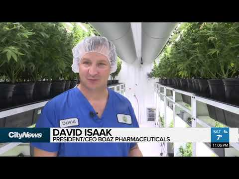 Micro Pot Production The 'craft Beer' Of Cannabis