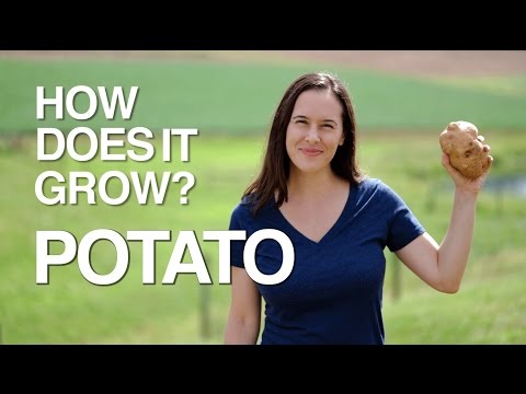 How Does It Grow Potatoes