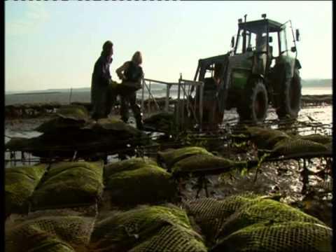 Download Green Waders Woman at the Sea