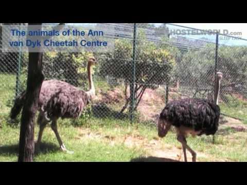 Pretoria - A video postcard | Hostelworld.com