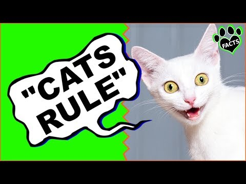 """Cat Quotes You Will Love  """"Cats Rule the World!"""" - Animal Facts"""