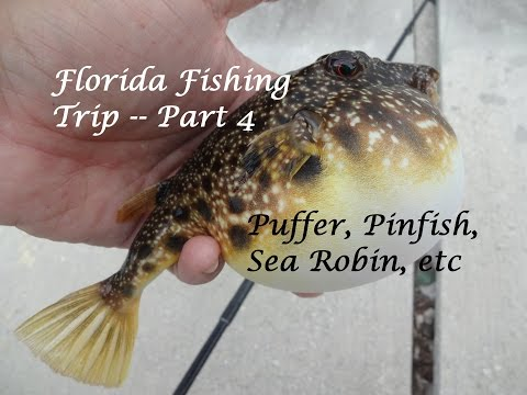 Florida Fishing Trip -- Part 4: Sea Robin, Permit, Pinfish (Fort Lauderdale, FL)