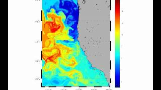 Phytoplankton Biodiversity (Species Richness) in the California Current System