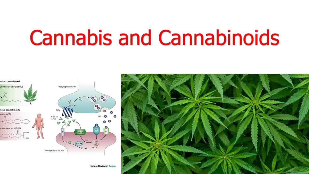 cannabis and cannabinoids youtube