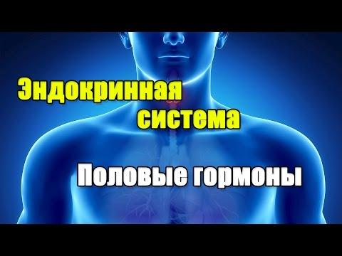 ЭНДОКРИННАЯ СИСТЕМА И ПОЛОВЫЕ ГОРМОНЫ. ГИПОТАЛАМУС-ГИПОФИЗ-ЯИЧКИ