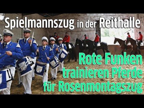 Rote Funken: Reiterstaffel trainiert Pferde mit Spielmannszug für Rosenmontagszug im Kölner Karneval