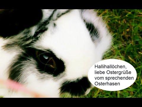 Lustige Ostergrüße Mit Sprechendem Osterhasen