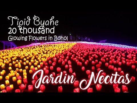 20 Thousand Glowing Flowers in Bohol  - Jardin Necitas | Tipid Biyahe #Travelvlog