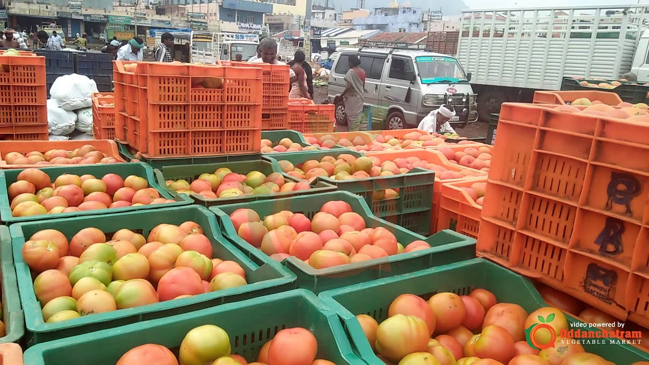Tomato Complete Packing Process and Exported to Andhra Pradesh